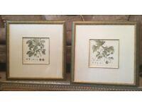 Unusual Beech & Plane Pair of Leaf Prints H23in/58cmW23in/58cm