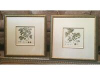 Unusual Beech & Plane Pair of Leaf Prints Excellent condition Framed & Glazed H23in/58cmW23in/58cm