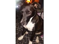 Loving Home Needed For Ruby - 5 year old female - Perfect Paws Dog Sanctuary