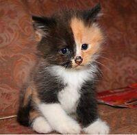 Kitten sitter