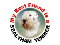 """/""""I Suffer from  MULTIPLE  AIREDALE  SYNDROME/"""" Dog Car Sticker by Starprint"""