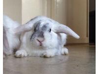 Bunny Willow