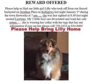 Help Find Lilly