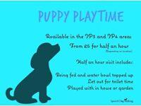 Puppy visits - Ipswich