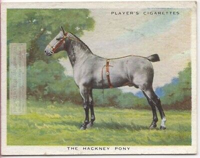 Hackney Pony Horse Breeds Types Of Equines c90 Y/O Ad Trade Card for sale  USA