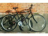 BSA Westcoast unisex bike
