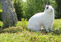 Rabbit Consultation Service and Grooming