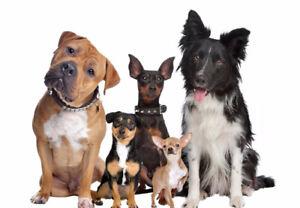Gardiennage pour chiens durant l'été