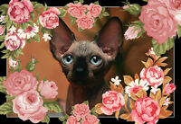 HYPO ALLERGENIC HAIRLESS SPHYNX KITTENS