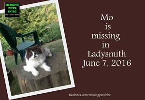 Lost Cat in Ladysmith