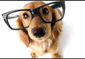URGENT- SEEKING DOG WALKER