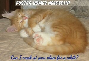 FOSTER HOMES NEEDED!!!