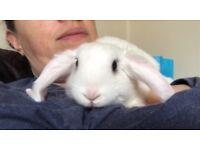 Rabbit ready to go