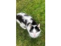 FOUND: Black and White cat in North Baddesley
