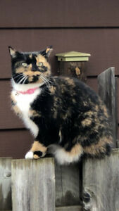 Missing Calico Cat Her name is Callie,
