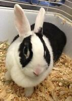 "Adult Female Rabbit - Bunny Rabbit: ""Sugar"""