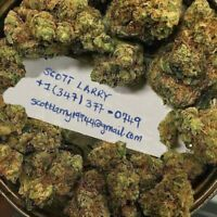 HIGH QUALITY MEDICAL MARIJUANA FOR SALE ALL STRAIANS