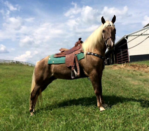 12 AWESOME TRAIL HORSES!!  GUARANTEED SATISFACTION!