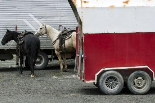 9 Horse Trailer Accessories