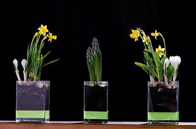 Aus dem kargen Garten an den Tisch - Frühlingsboten im Glas