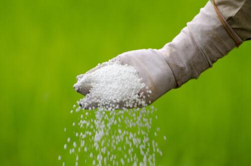 CO2-Düngung für prächtige Wasserpflanzen