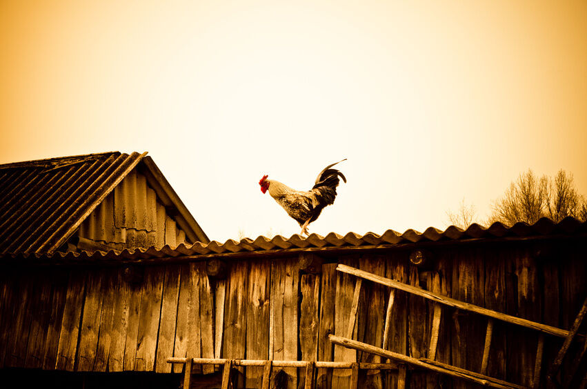 Your Guide to Buying Chicken House