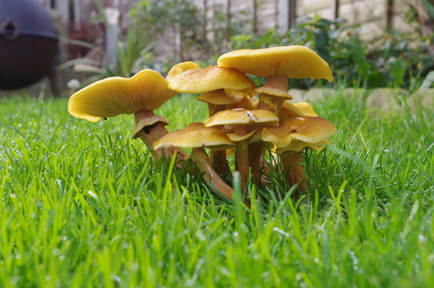 Your Guide to Buying Everything You Need to Grow Mushrooms