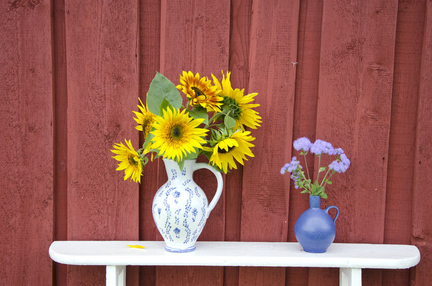 Emma Bridgewater Ceramic Buying Guide