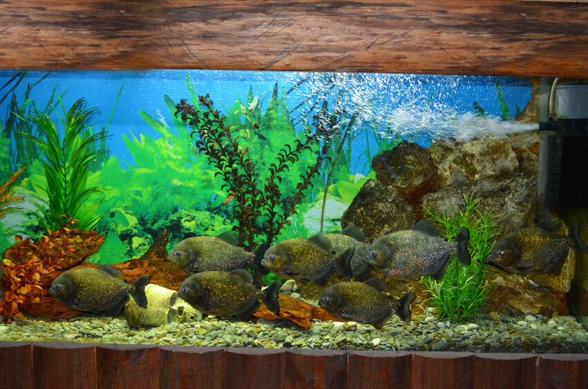 Advice on uv water sterilizers healthy fish and an algae for What causes algae in fish tanks