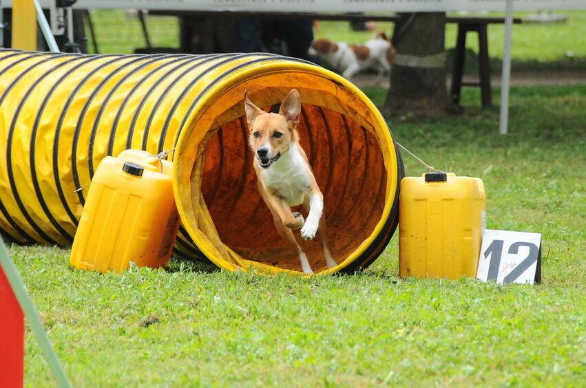Dog Agility Tunnel For Sale