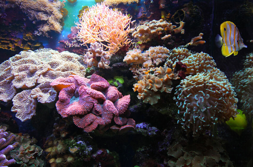Buying Coral for Your Aquarium What to Look For
