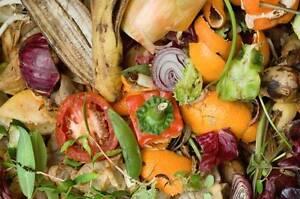I Want Your Veggie Scraps!!! Kurunjang Melton Area Preview