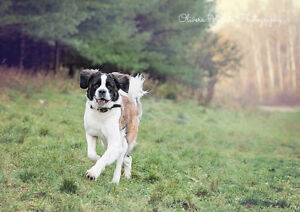Pet Photography Cambridge Kitchener Area image 4