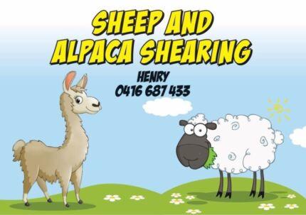 Sheep/Alpaca Shearer Available