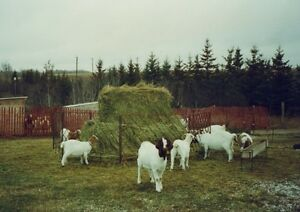 New pricing, Sheep and Goat feeder panels