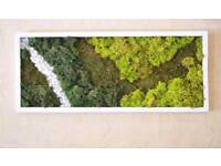 Natural pictures reindeer moss with frame