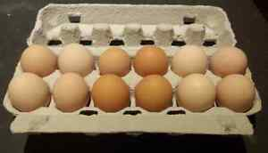 Fertile Chicken Eggs Kellyville The Hills District Preview