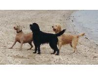 Dog Walkers Livingston | Professional Dog Walking Livingston