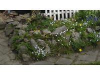 Large rocks for garden landscaping
