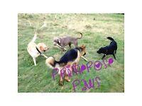 Primrose Paws dog walking and pet sitting services