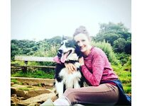 North Down Paws, Professional Dog Walking and Pet Sitting
