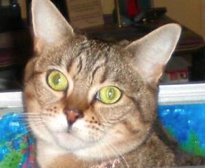 Missing Cat Bendigo Bendigo City Preview