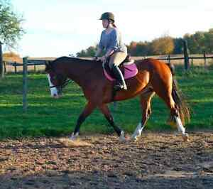 Looking to hack your horse for you!