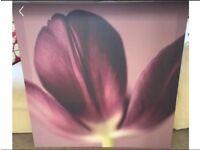 Next Purple Tulip canvas