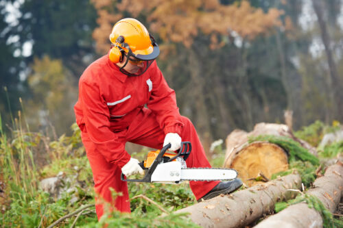 Loggers Use Powered Tools To Perform Jobs