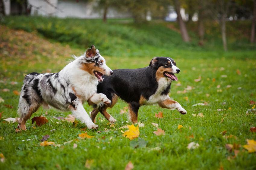 Die beliebtesten Hundeaccessoires von Julius K9