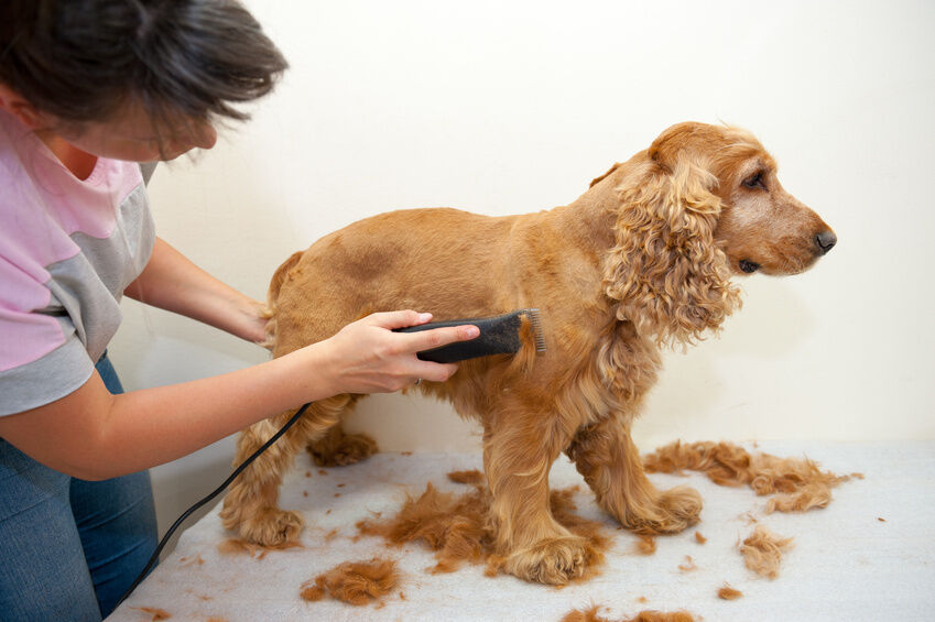 How To Groom Dog At Home With Clippers