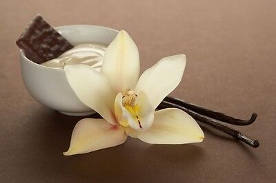 French Vanilla Flavor Oil - Flavor Oil 1/2 French Vanilla Lip Balm Body Oils
