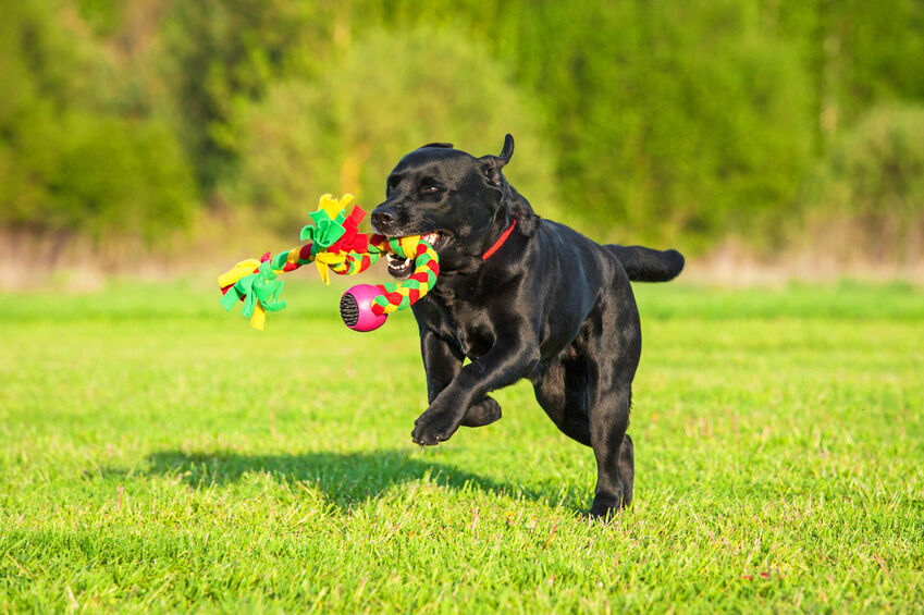 Image result for dog bring you their favorite toy