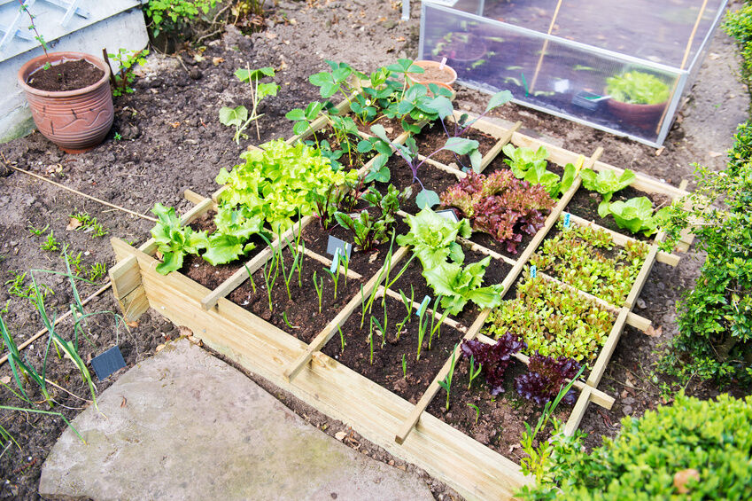 5 easy vegetable garden ideas for beginners ebay for Garden designs for beginners